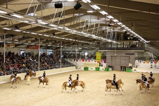 Foto: Bei der Hengstschau des Ponyverbandes Hannover in Verden präsentierten im Vorjahr die Haflinger anspruchsvolle Themen-Quadrillen - Fotograf: Ponyverband Hannover/ Pantel