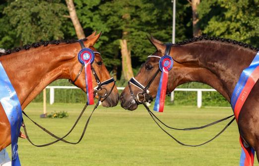 Foto: Die Siegerstuten Tiramisu (l.) v. Toulon und Faraglioni (r.) v. Feinrich - Fotograf: LL-Foto