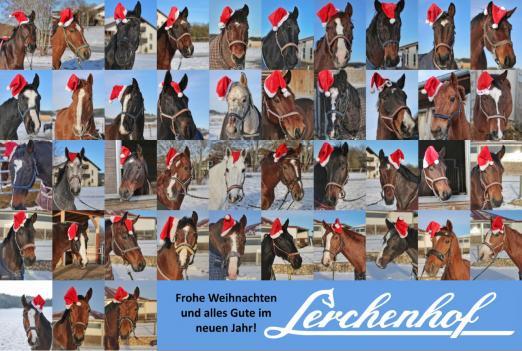 """Die """"Weihnachts-Pferde"""" vom Lerchenhof in Münsingen"""