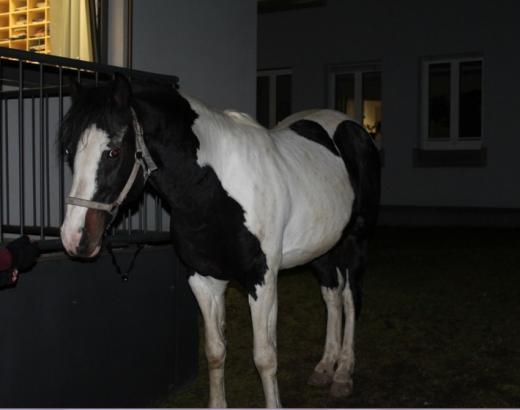 Foto: Entlaufenes Pferd - Fotograf: Polizeidirektion Landau