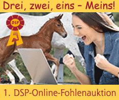 Foto: DSP-Online-Fohlenauktion - Fotograf: Adobe Stock/Weigel